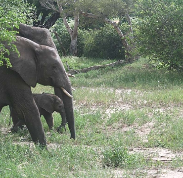 Elephants in the Ruaha National Park