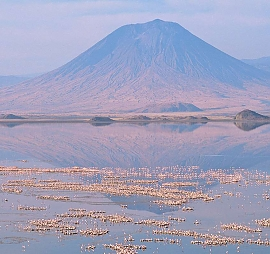 Flamingos near Mount Oldoinyo Lengai