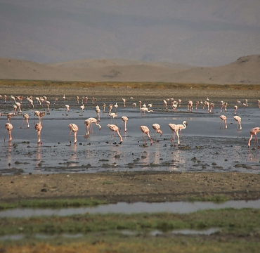 Laser Flamingos in Lake Natron