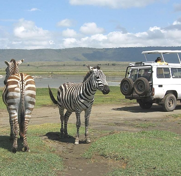 Game Drives in Tanzania