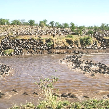 Wildebeests Migration in Serengeti Tanzania