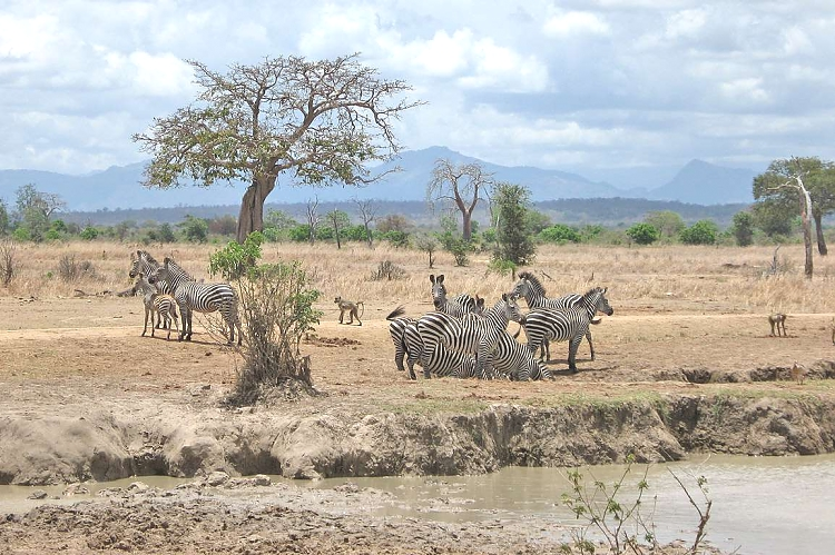 Image result for images of selous mikumi safari